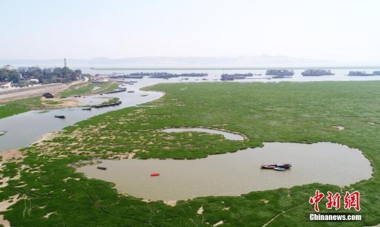 """资料图:鄱阳湖水位下降 变身""""大草原""""。魏东升 摄"""