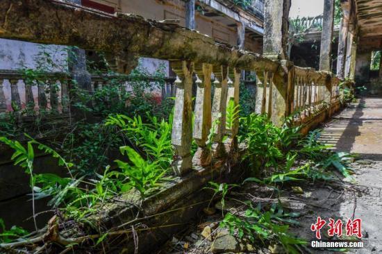 图为林鸿高围楼二楼走廊护栏也已破败,长出植物。骆云飞 摄