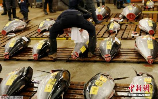 当地时间10月6日,日本东京筑地市场举行最后一次拍卖。