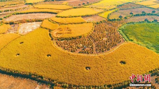 耕地收割季节美不胜收。 邓和平 摄