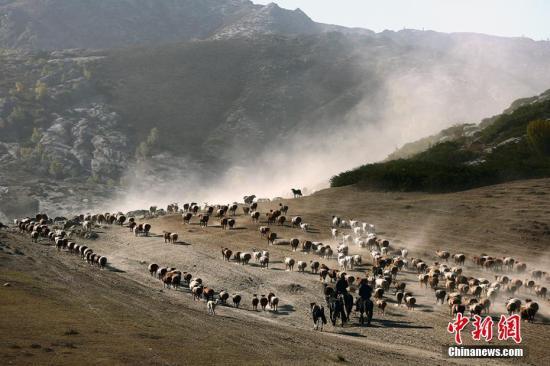 资料图:新疆牧民秋季转场。李岩 摄