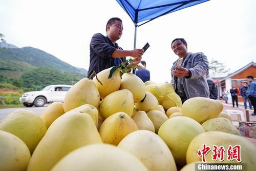 材料图:一位旅客(左)扫码付出购置果农的蜜柚。a target='_blank' href='http://www.chinanews.com/'中新社/a记者 贺俊怡 摄