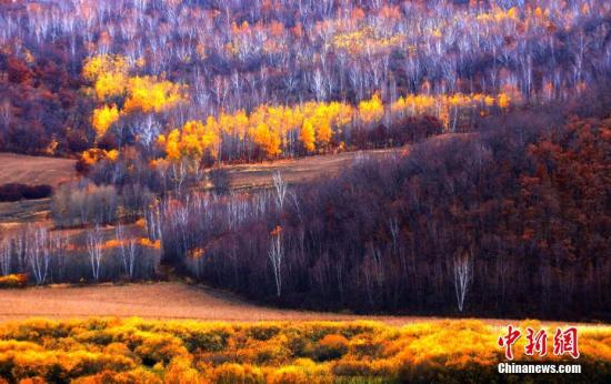 """近日,正值深秋季节,位于中国北疆的内蒙古自治区呼伦贝��秋景如画,草原一片金黄,大兴安岭森林层林尽染。据了解,呼伦贝尔总面积26.2万平方公里,境内大兴安岭森林面积12万平方公里,草原面积8万平方公里,耕地逾2万平方公里,素有""""北国碧玉""""之称。中新社记者 蒋希武 摄"""