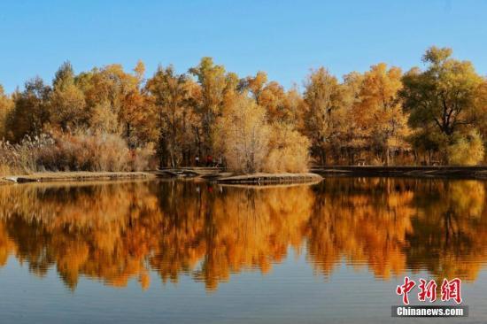 资料图:甘肃酒泉市金塔沙漠胡杨林景区叶片金黄。杨志彬 摄