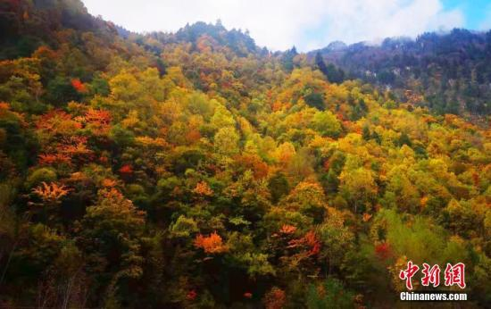 深秋时节,四川省阿坝州理县秋意正浓,万山红遍,层林尽染,红叶、雪山、森林共同构成了一个神奇的梦幻走廊,如诗如画,让人流连忘返。谢晓庆 摄