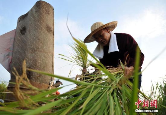 考古发现:7000年前南稻北黍共存淮河流域