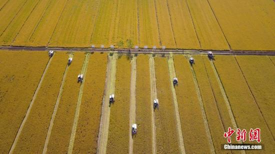 资料图:水稻丰收。孟德龙 摄
