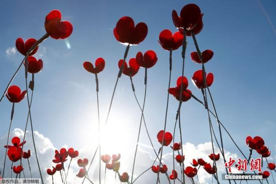 当地时间11月2日,比利时迈泽,为了祝贺一战终结100周年,当地植物园用成千上万朵红瓶盖制作的罂粟花摆成鸽子造型。