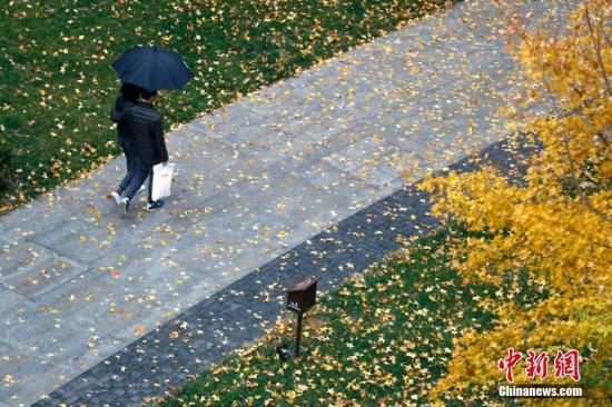 11月4日,北京行人從落滿樹葉的小路經過。當日,北京陰有小雨,山區雨夾雪或雪,陣風六級。受冷空氣影響,北京白天最高氣溫11℃,夜間最低氣溫2℃,氣溫下降明顯,風寒效應顯著。 中新社記者 劉關關 攝