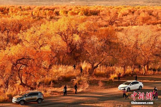 11月初,新疆克拉玛依市乌尔禾区正值一年中最美的季节。闵勇 摄