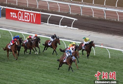 11月8日,在澳大利亚墨尔本赛马节上,由中国企业TCL冠名的一场赛事在佛莱明顿赛马场举行。今年是TCL连续14年赞助墨尔本赛马节。中新社记者 陶社兰 摄