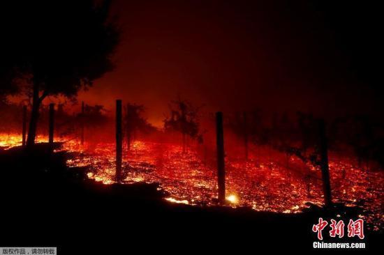 """加州林业和消防部门官员表示,山火火势凶猛,已经""""失控""""。"""