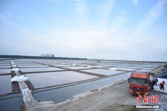 资料图,福建泉港山腰盐场生产作业正常,货车进场装运食盐。中新社记者 陈龙山 摄