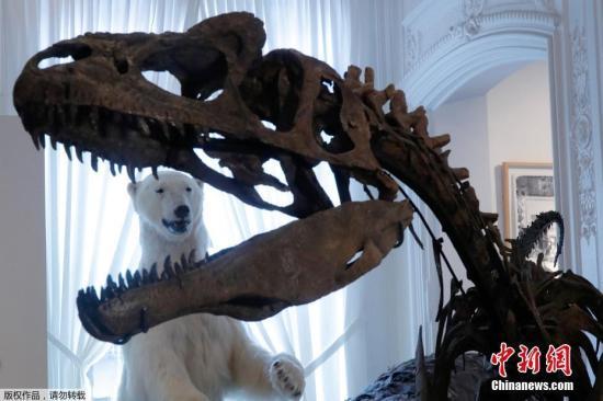 资料图:恐龙骨骼。