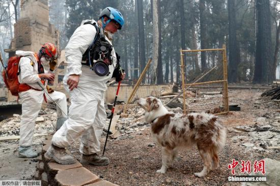 资料图:救援人员仍在被大火摧毁的天堂镇内和附近山区搜寻幸存者和死者遗骸,并汇总失踪者名单。