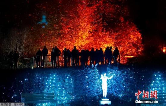 德国柏林植物园举办灯光秀活动,百万彩灯装点浪漫夜晚吸引民众观赏。