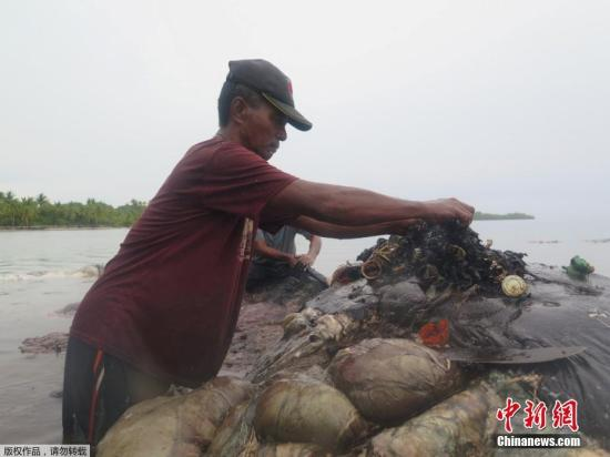 胃里塞满40公斤塑料袋菲律宾海岸一鲸鱼搁浅身亡