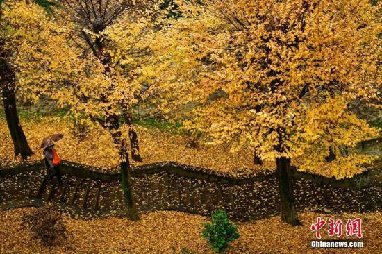 """秋冬相交时节,欧洲多地呈现出斑斓景致,山野风光进入""""童话时间""""。图为西班牙潘普洛纳,路人走过落满秋叶的步行台阶。"""