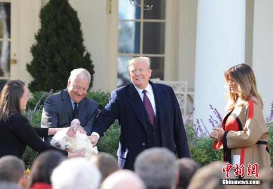 """当地时间11月20日,美国总统特朗普出席2018年感恩节总统赦免火鸡仪式。一只重约39磅的雄性火鸡――""""豌豆仔""""(Peas)在白宫获得特朗普""""赦免""""。中新社记者 陈孟统 摄"""