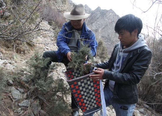 在西藏山南,两位曼巴(治疗师)正在适时采集药浴药材。巴桑伦珠 摄 中国非物质文化遗产保护中心供图
