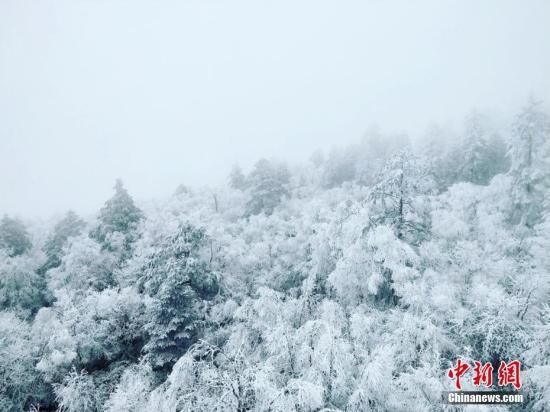 四川雅安市天全县二郎山喇叭河景区大雪。葛旺 摄