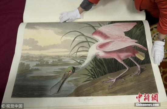 今年夏天,《美国鸟类》在纽约拍卖,最后以965万美元的价格成交。这本珍贵的书被锁在一个特殊的保险库里,但它属于公众,任何人都可以提前预约并在工作人员监督下翻阅。图片来源:视觉银河网址客户端