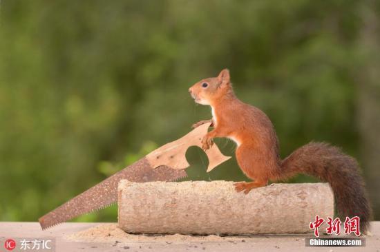 而这两只松鼠将被安乐死.