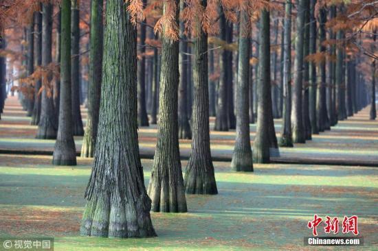 材料图:丛林。肖劲紧 摄 图片滥觞:视觉中国