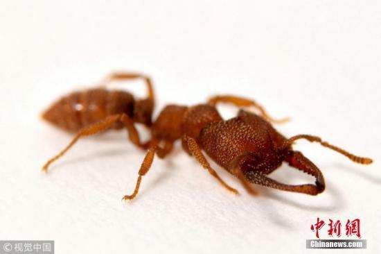 资料图:蚂蚁。 图片来源:视觉中国