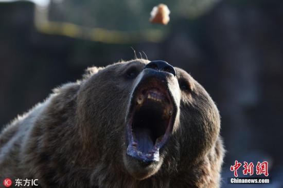 资料图:棕熊。 图片来源:东方IC 版权作品 请勿转载