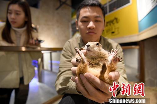1月8日,广西南宁一室内动物观赏乐园内,饲养员与动物亲密互动。中新社记者 俞靖 摄