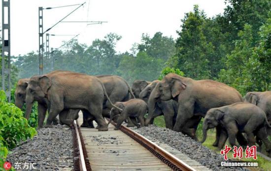 资料图:印度大象横穿铁轨。
