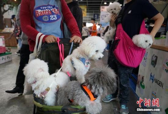 资料图:2019年1月18日,香港宠物节暨国际宠物用品博览在香港会展中心开幕<a target='_blank' href='http://www.chinanews.com/'>中新社</a>记者 张炜 摄