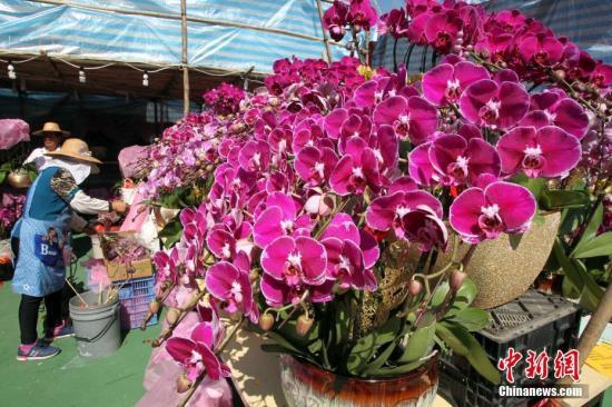 香港维园花市上的摊主们忙于整理花卉。中新社记者 洪少葵 摄