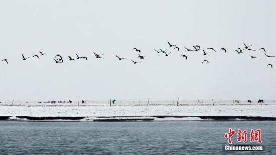 成群结队的飞禽。马怡睿 摄