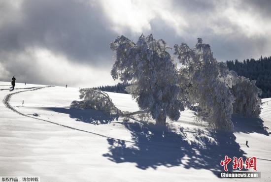 当地时间1月29日,受冷空气影响,德国持续低温天气。图为弗赖堡市积雪覆盖的树木。