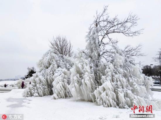 """资料图:魔鬼""""极地涡旋""""席卷美国席卷北美,芝加哥出现零下25℃的极寒天气,街沙滩上的树木被冰封,宛若巨型冰雕一般,引来大批民众拍照留念。图片来源:东方IC"""