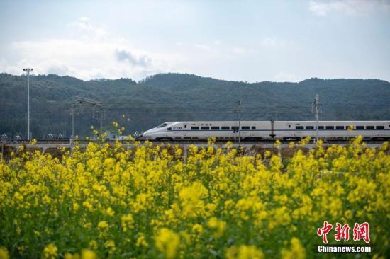 资料图:高铁列车穿行在油菜花间。<a target='_blank' href='http://www.chinanews.com/'>中新社</a>发 吴德军 摄 图片来源:CNSPHOTO