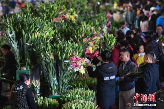 2月2日,民众在昆明斗南花市选购鲜花。随着春节的临近,昆明斗南花市迎来销售高峰,民众扎堆前来选购鲜花,市场一片热闹景象。昆明四季盛产鲜花,依传统,鲜花是昆明人过年必不可少的年货之一。中新社记者 任东 摄