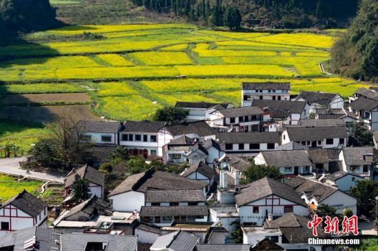 资料图:贵州省兴义市万峰林万亩油菜花竞相绽放。中新社记者 贺俊怡 摄
