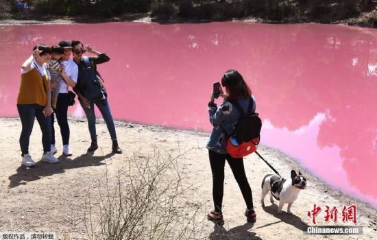 当地时间2019年3月4日,澳大利亚墨尔本,当地一个湖泊呈现粉红色,这是由于其极端的盐分含量加之高温天气影响,从而让这个湖的颜色变成了鲜艳的粉红色,看上去像是被有毒物质污染了一样。