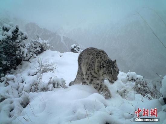 """三江源牧民监测员与野生动物""""不被打扰的相聚"""""""
