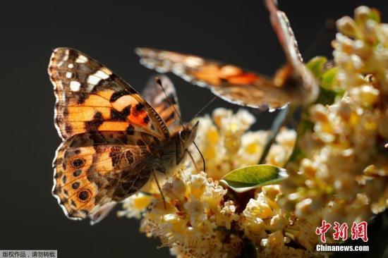 蝴蝶都去哪儿了?报告称英国野生生物数量下降