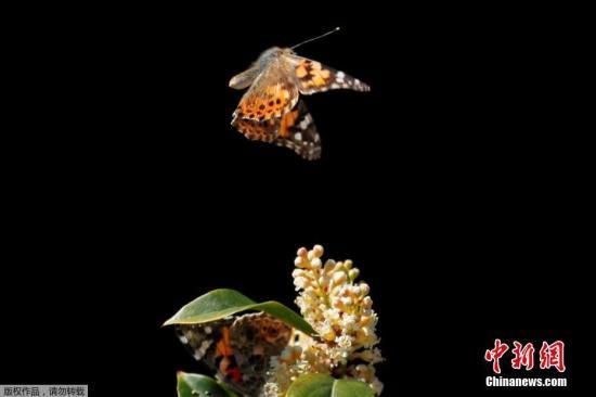 资料图:蝴蝶。