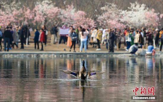 资料图:北京春天景色。<a target='_blank' href='http://www.chinanews.com/'>中新社</a>记者 杜洋 摄