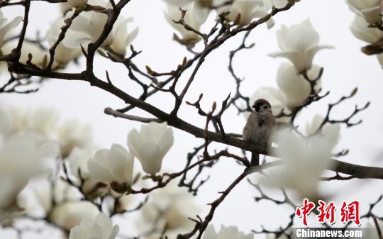 巴拿马境内已发现1200多个兰花品种