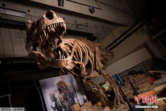 日本高中生参加校外教学挖出9000万年前的暴龙化石