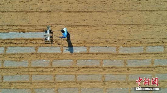资料图:甘肃张掖农民为制种玉米播种压膜。王超 摄