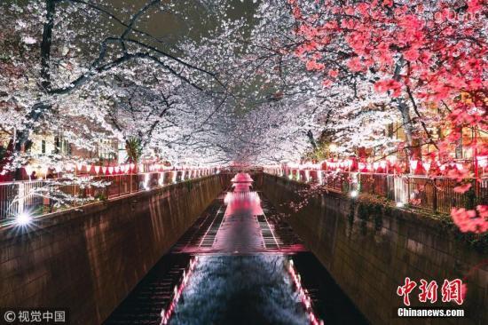 资料图:当地时间3月29日,随着樱花的盛开,东京目黑川于2019年3月23日至4月10日的下午5点至晚9点开启夜间点灯的樱花祭活动。 图片来源:视觉中国