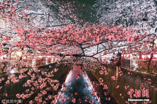 资料图:当地时间3月29日,随着樱花的盛开,东京目黑川于2019年3月23日至4月10日的下午5点至晚9点开启夜间点灯的樱花祭活动。 图片来源:视觉澳门葡京在线娱乐官网